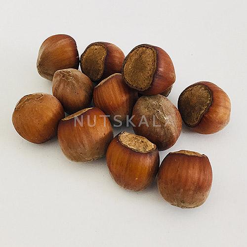 فندق با پوست ناتس کالا خشکبار nutskala hazelnut wholesale nuts bazaar freshnuts kernelo