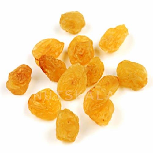 nuts bazaar kernelo nutskala golden raisin wholesale کشمش طلایی کرنلو ناتس کالا عمده