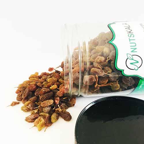 کشمش سایه خشک ارگانیک کرنلو ناتس کالا nutskala kernelo sundried raisin nutsbazaar
